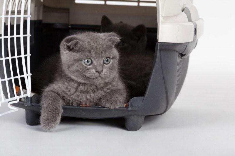Køb transportbur til dyr, hvis du vil rejse med hund eller kat