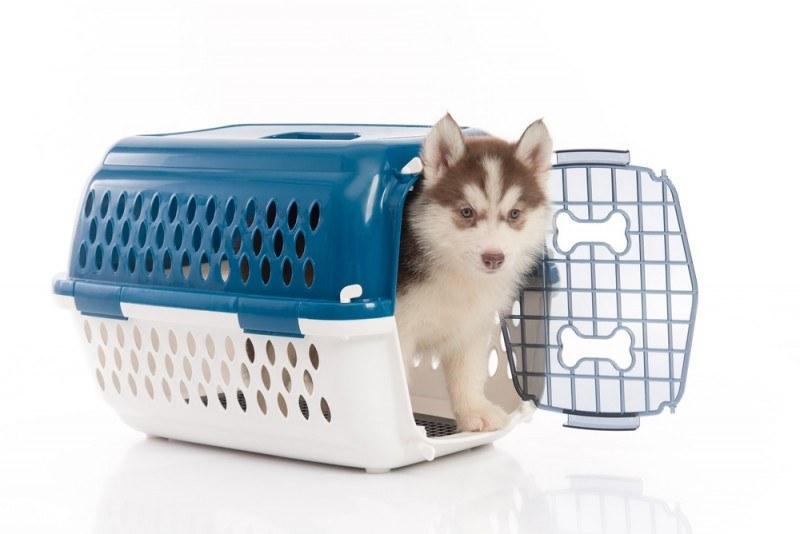 Værd at vide om indførsel af hund til Danmark